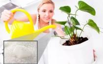 Как поливать цветы глюкозой?