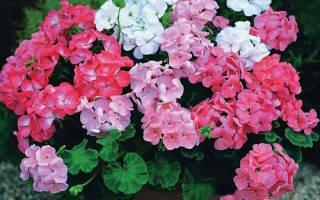 Описание комнатных растений для детей в детском саду
