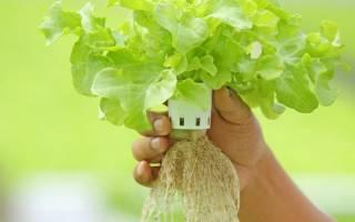 Вырастить гидропон в домашних условиях