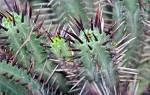 Как правильно ухаживать за кактусами в домашних условиях?