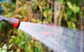 Можно ли для полива использовать дренажный насос для полива?