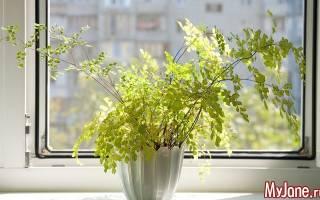 Какие растения есть домашние?