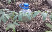 Как правильно сделать дырки в пластиковой бутылке для капельного полива?