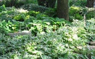 Теневыносливые деревья для сада