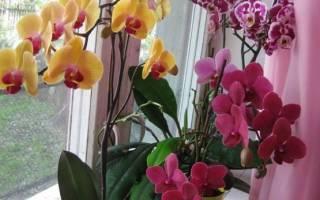 Как посадить орхидею в горшок в домашних условиях?