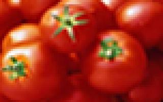 Особенности выращивания фуксии: краткое описание