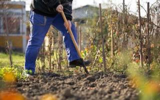 Уход за земельным участком осенью