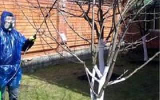 Уход за деревьями осенью от вредителей