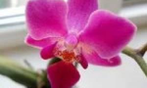 Как выбрать орхидею при покупке?