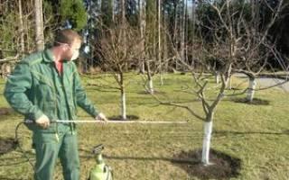 Когда опрыскивать деревья осенью железным купоросом