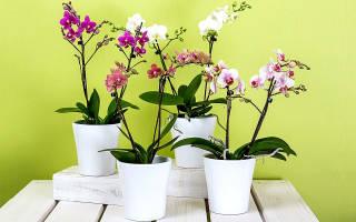 Как правильно ухаживать за орхидеями чтобы они цвели?
