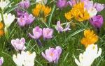 Какие многолетние есть цветы?