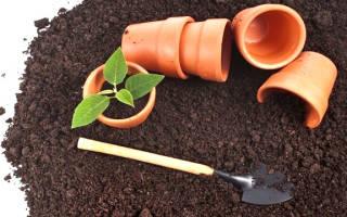 Чернозем для комнатных растений