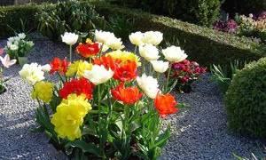 Многолетние цветущие цветы для могилы