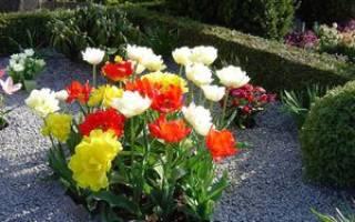 Какие многолетние цветы лучше сажать на кладбище?