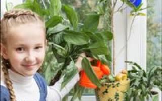 Какие комнатные растения можно посадить в детскую комнату?