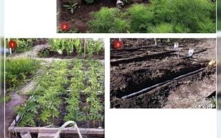Дренаж для полива сада под корень труба в земле