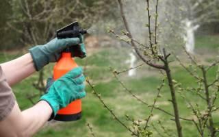 Можно ли обрабатывать железным купоросом деревья?