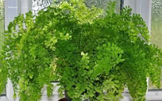 Виды комнатных растений и названия