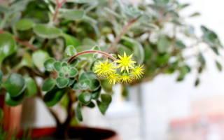 Комнатные цветы притягивающие удачу и деньги