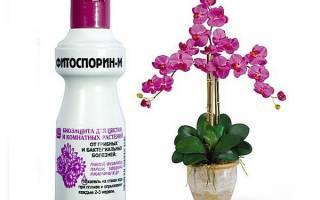 Обработка орхидей фитоспорином