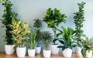 Растения комнатные и не комнатные растения