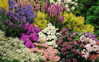 Растения на даче многолетние