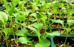 Черенкование растений в домашних условиях