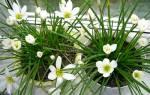 Цветы в доме для удачи