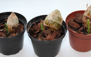 Как посадить орхидею из вьетнама?
