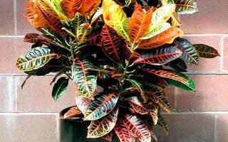 Декоративно лиственные растения названия