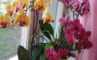 Как правильно посадить орхидею?