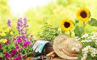 Глюкоза как удобрение для цветов