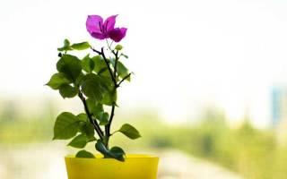 Цветы для удачи и денег