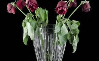 Как размножаются розы черенками из букета в домашних условиях?