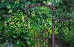 Декоративные тенелюбивые растения для сада