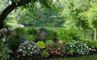 Тенелюбивые кустарники и цветы
