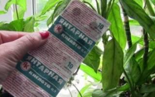 Как разводить янтарную кислоту в таблетках для полива комнатных цветов?