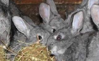 Уход за кроликами осенью