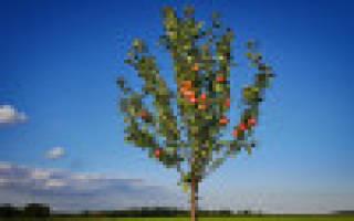 Особенности выращивания вейгелы