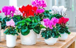 Комнатные цветы смотреть картинки