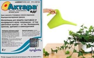 Как развести актару для полива комнатных растений от мучнистого червеца?
