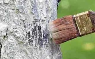 Плодовые деревья уход осенью побелка