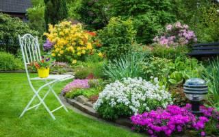 Лучшие цветы для дачи