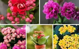 Домашние растения в картинках