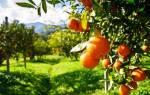 Натуральное удобрение для комнатных цветов и цитрусовых
