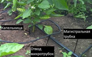 Капельный полив жук тепличный от водопровода на 60 растений