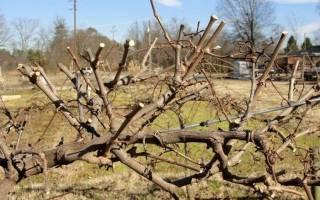 Уход за виноградом с весны до осени