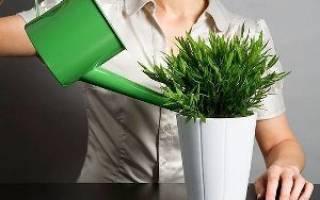 Как смягчить воду для полива растений в домашних условиях?