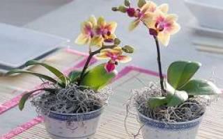 Орхидеи уход в домашних условиях полив горшок без дырок